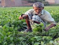 Punjab government distributes cheques among farmers under Crop In ..