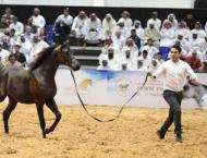 Dubai International Arabian Horse Championship & Fair 2019 op ..