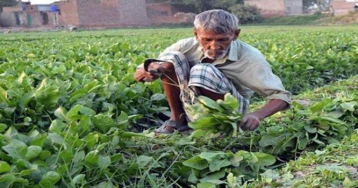 Punjab government distributes cheques among farmers under Crop Insurance Scheme