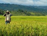 Rice growers trained on using modern technology