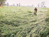 Survey begins for assessment of crop losses caused by hailstorm,r ..