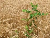 Faisalabad Agriculture University develops technology to control  ..