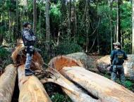 Brazil police launch raids over illegal Amazon logging
