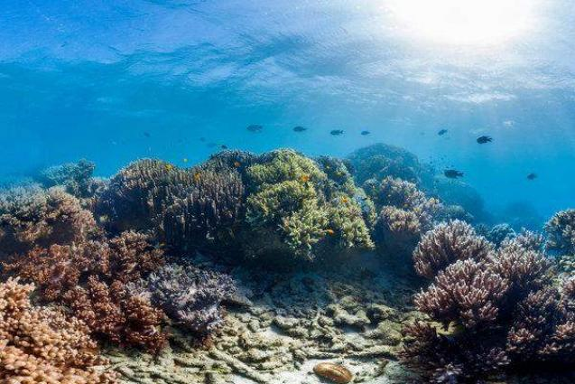 Recovery of Great Barrier Reef delayed by climate change