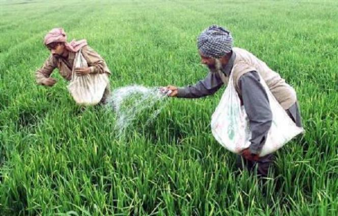 Punjab Govt providing subsidy to farmers on fertilizers to enhance crop production