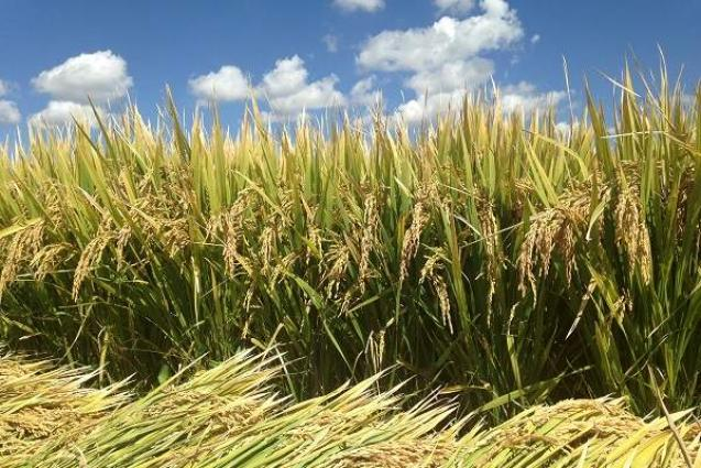 Serious efforts needed to ensure food security, boost agriculture exports