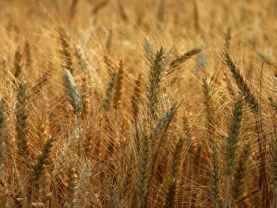 Govt will provide facilities at wheat procurement centres