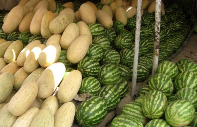 Summer specialty 'Melons' in high demand