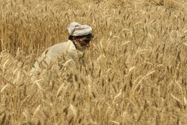 Wheat procurement drive starts in Punjab