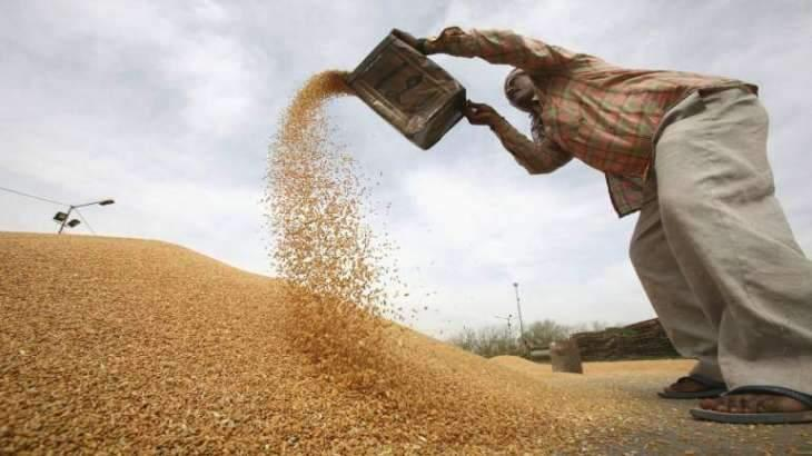 Punjab govt to establish 384 wheat procurement centers in 36 districts