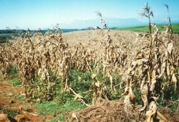 National Assembly body concerns over damage of crops, recommends relief to farmers