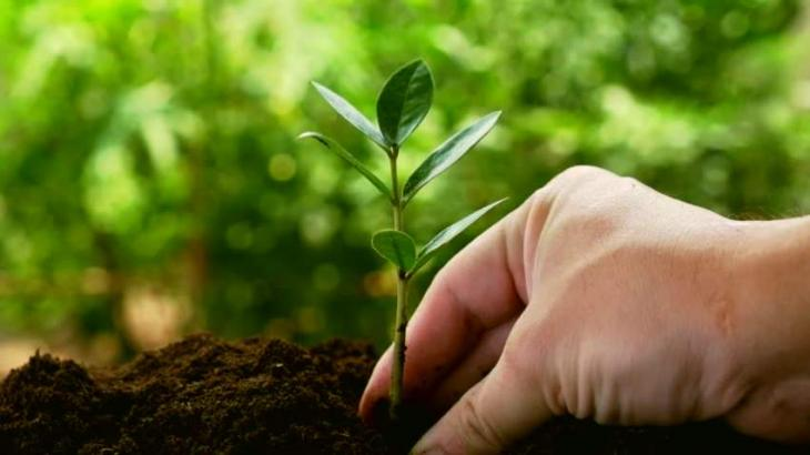 Private banks  support HDA for green Hyderabad campaign
