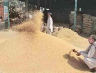 No shortage of wheat in Gilgit Baltistan
