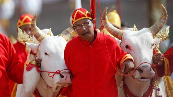 Ploughing Ahead: Sacred Oxen Predict abundant Thai Harvest