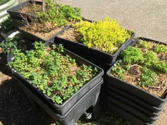 Winners Of School Gardening Competition Announced - UrduPoint