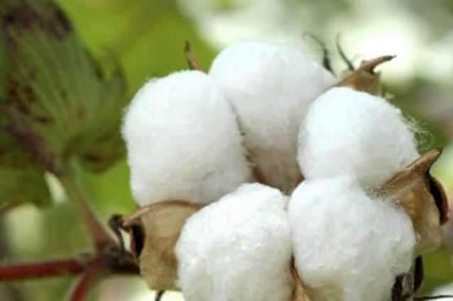 Spot rates of cotton (Crop 2018-19) 25 May 2019