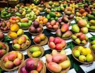 Sindh Agriculture Minister inaugurates 2-day Mango Festival