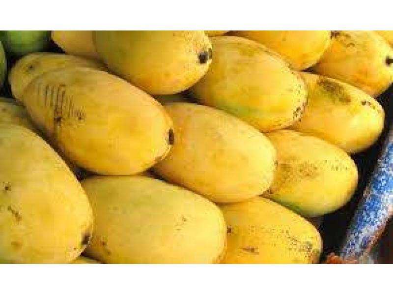 Pakistani Mangoes Hit The UAE Markets - UrduPoint