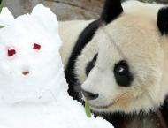 Moscow Zoo to Celebrate Birthdays of 2 Giant Pandas in Late July  ..