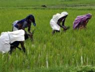 Technical assistance provided to farmers for bumper crop