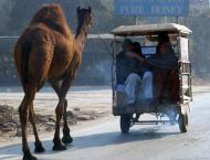 Ban imposed on transportation of sacrificial animals from Lower D ..