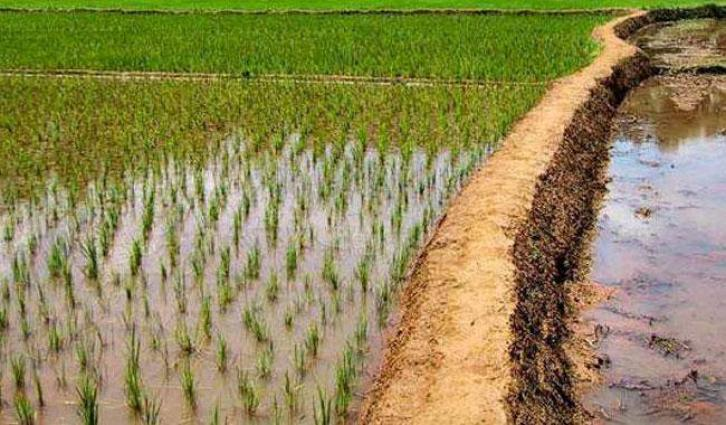 Excessive rainwater not good for most crops