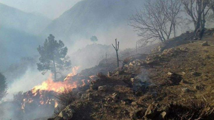 124 forest fires incidents occurred this year in KPK; scorching weather, pyromaniac attitude responsible