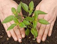 PHA kicks off monsoon tree plantation