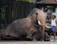 Sri Lanka probes elephant cruelty at Buddhist parade