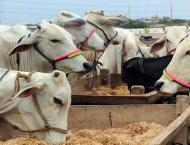 TMA fails to clear offal of sacrificial animals