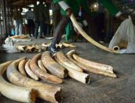 Wildlife meet mulls trade rules to counter 'unprecedented' specie ..