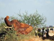 Wildlife trade conference debates rules for elephants, mammoths