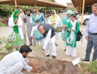 Gomal University launches tree plantation drive under 'Plant for  ..
