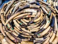 Yahoo Japan to end ivory trade on its websites