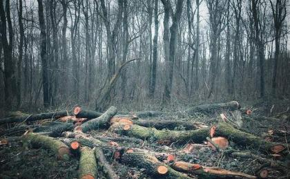 Deforestation resulting in climatic changes