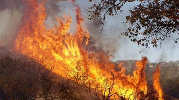 500 firefighters to battle blaze in French forest