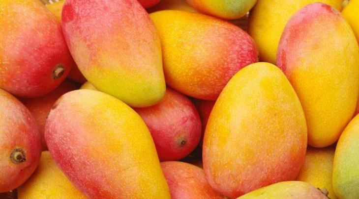 Pakistani Mangoes Import Possible Through PTA: Tunisian
