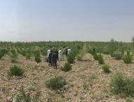 'Ten Billion Tree Tsunami Programme' awaiting funds allocated und ..
