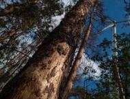 Germany's climate-stressed trees face 'catastrophe' as bugs attac ..