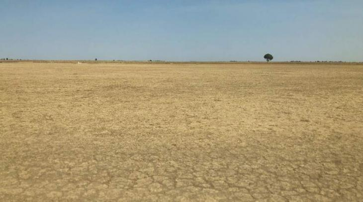 Restore land to save the planet, says head of UN body combating desertification