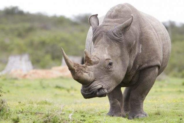 Nine black rhinos from S.Africa relocated to Tanzania