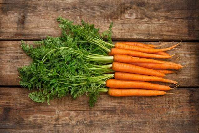 Carrot cultivation to be started immediately