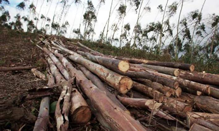 MoCC initiatives underway to stem land degradation through afforestation
