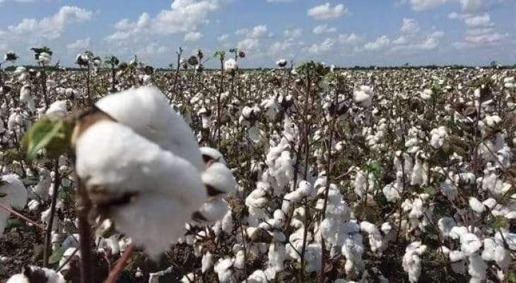Farmers Advisory Committee issues fortnightly cotton advisory applicable till Sept 30