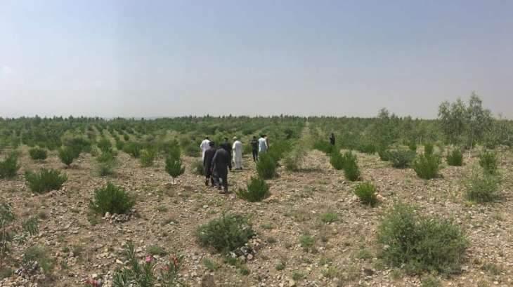 'Ten Billion Tree Tsunami Programme' awaiting funds allocated under PSDP