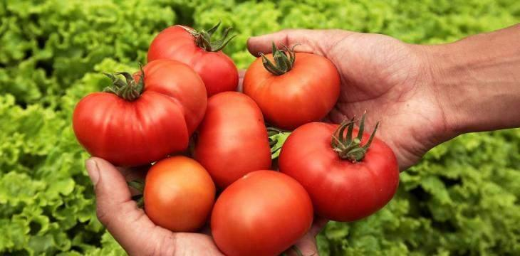 Iron-rich foods may cancel out tomatoes' anticancer benefits