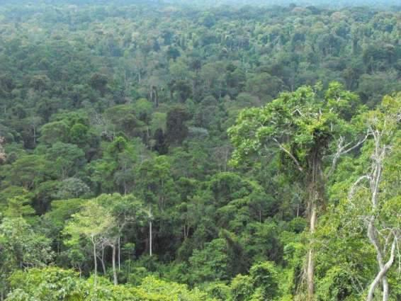Wildlife deptt, local communities protecting wildlife bio-diversity in GB: DFO