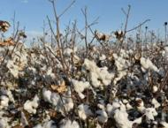 Quality inputs, advisory service termed vital for better cotton p ..