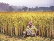 Rs 2k per acre subsidy for gram crop promotion in Punjab