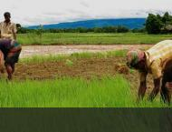 Tunnel cultivation can increase farmers' income manifolds; Agri e ..